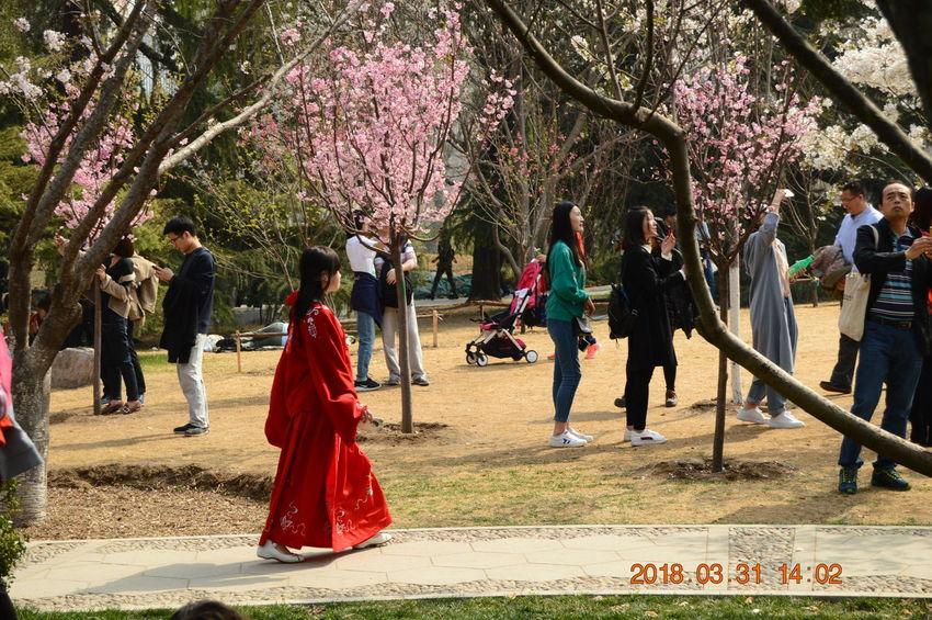 Flower Park Walking