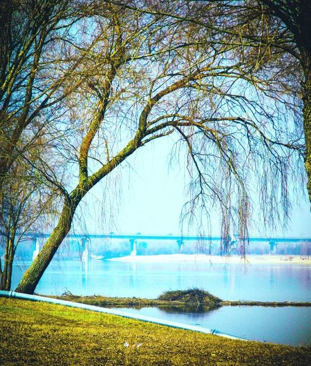 Relaxing Nature EyeEm Nature Lover EyeEm Best Edits Eyeem Don't Like My Photos EyeEm Gallery Our Best Pics Belarus Sunny Day Beautiful