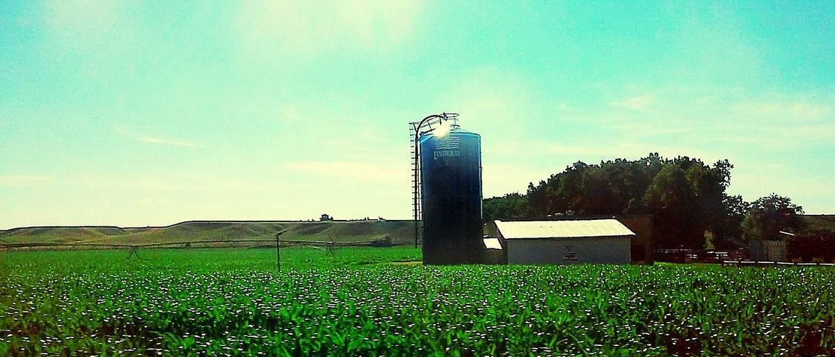 Growth Grass Agriculture Sky No People Day Outdoors Nature Irrigation Equipment