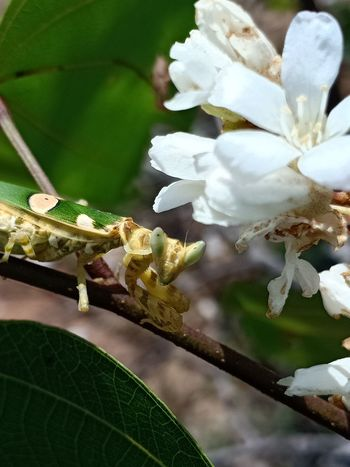 Flower Leaf Branch Insect Close-up Animal Themes Plant Green Color