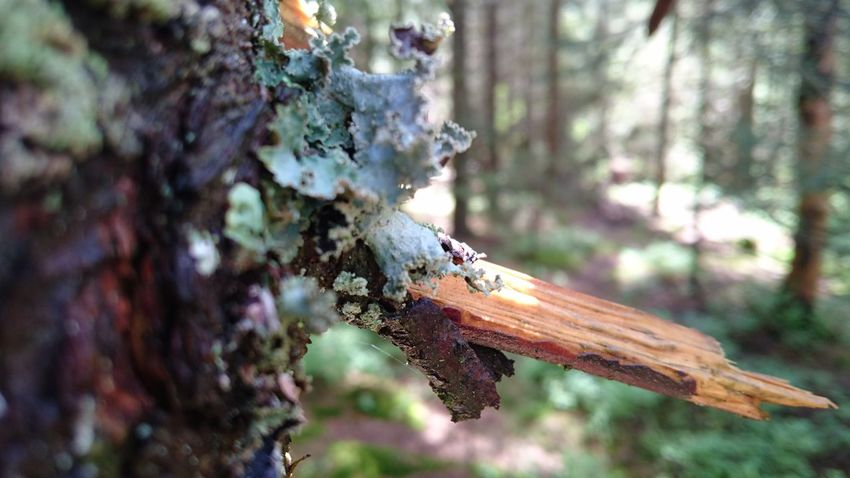 Close-up Focus On Foreground Nature No People Outdoors Survival Tree Trunk Wounded