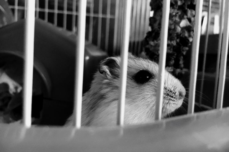 Close-up Pets Animal Themes Hamster Cage One Animal Blackandwhite First Eyeem Photo