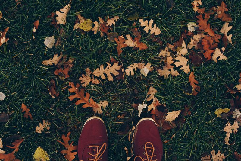 Low section of person wearing shoes on grassy field during autumn