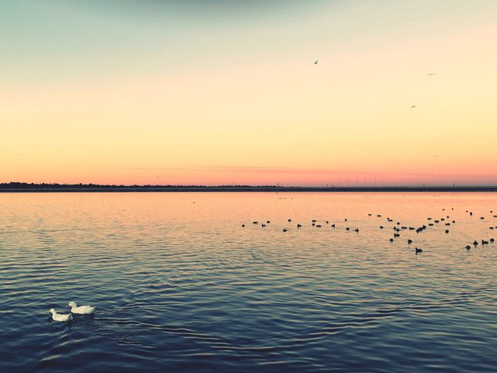Lake Scene Tranquil Scene Lake Scenics Animal Wildlife Reflection Flock Of Birds Silhouette Tranquility Waterfront No People