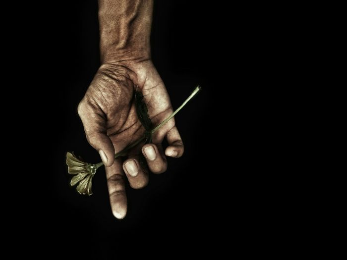 Cropped hand holding flower against black background