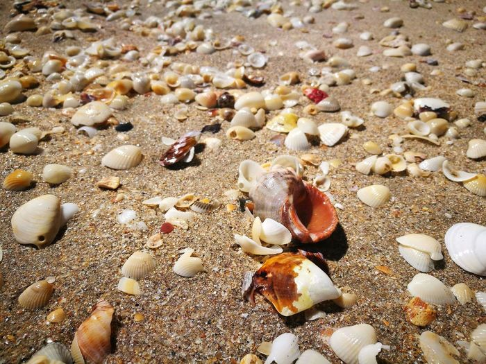 Conchas Beach Sand Nature Seashell Shore Full Frame No People first eyeem photo