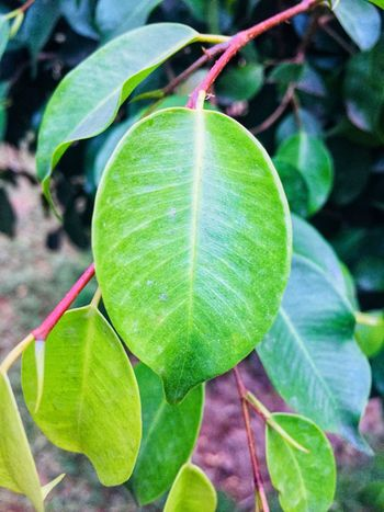Leaf Green Color Growth Close-up Nature Plant Day No People Outdoors Beauty In Nature Focus On Foreground Freshness
