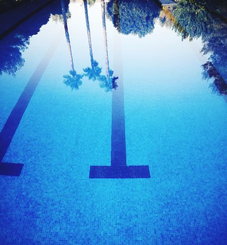 Only water Water Outdoors No People Waterpool Pool Poolside Tree Trees Trees And Water Photography Trees And Sky Pool Time Summer Hot Day Hot Days Hot Day! Dolores Alicante Tranquility Breathing Space