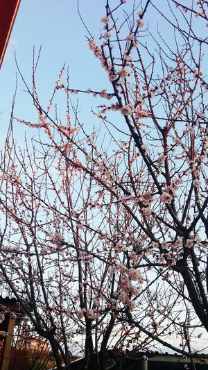 Nature Tree Trees Spring Spring Flowers Turkey after the rain :)