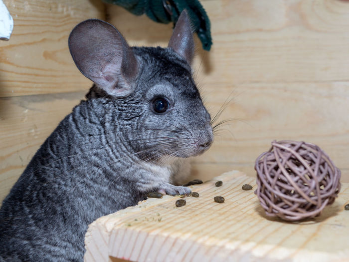 Chinchilla Twig Ball Wicker Ball Wicker Pets Animal