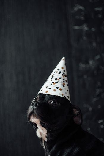 Portrait of black dog looking away