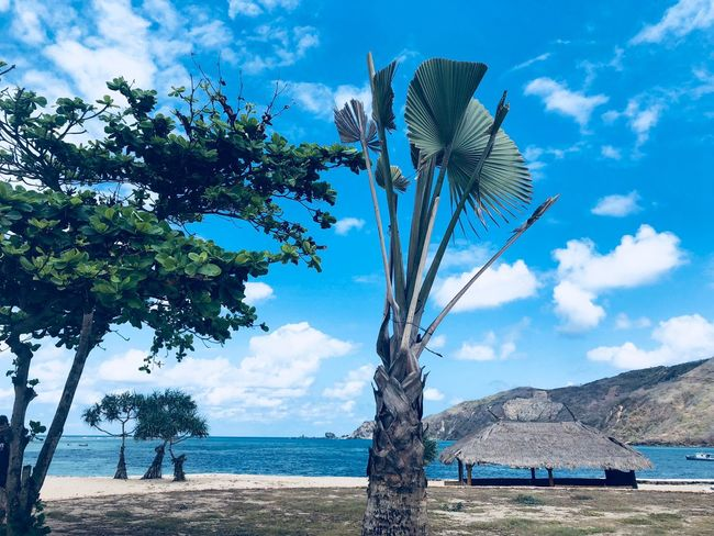 Tree Water Sky Plant Nature Sea Day Beauty In Nature Beach No People Blue Sunlight Growth Land Cloud - Sky Scenics - Nature