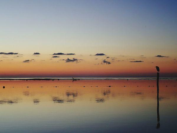 EyeEm Selects Reflection Sunset Sky Bird Silhouette Silhouette Tranquility Beauty In Nature New On Eyeem Sunrise CARIBBEANLIFE Shotzdelight Wanderlust Horizon Simplicity Mexico Tranquility Landscape Clear Sky Water Beauty In Nature Nature Scenics Horizon Over Land Non-urban Scene
