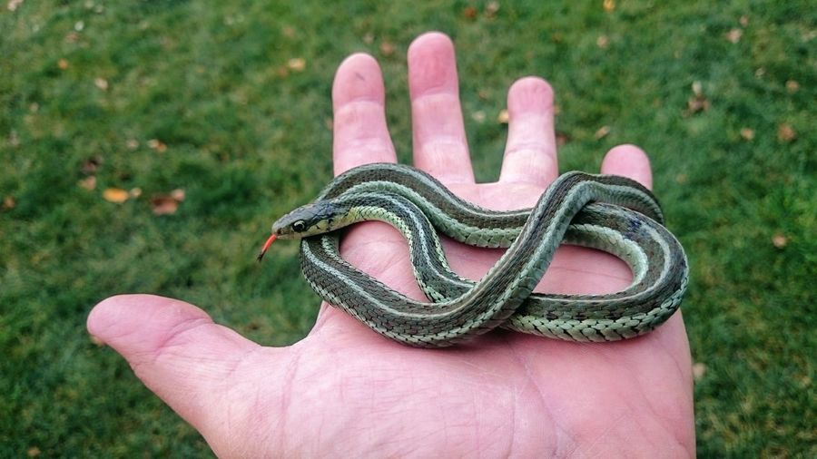 Cropped hand holding snake over field