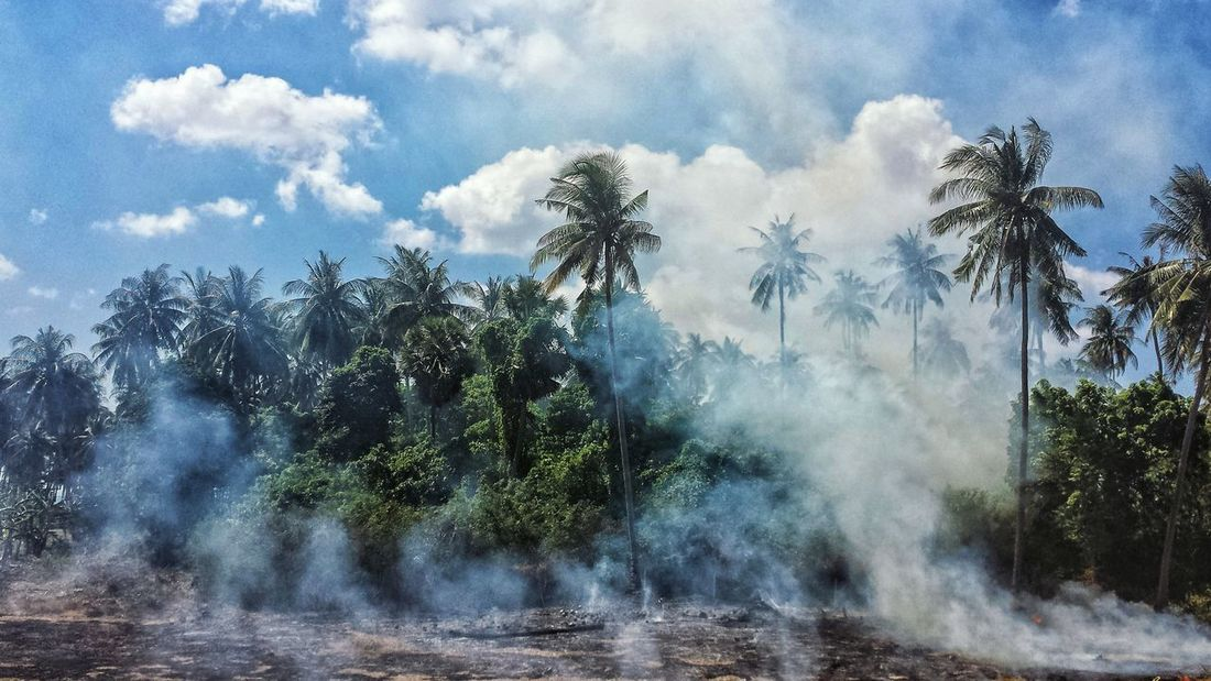 Morning Blue Sky Southeast Asia ASIA Outdoors Palm Trees Smoke Fire Field Clearing Southern Thailand Koh Lanta Island Krabi Province Spotted In Thailand Miles Away Sommergefühle