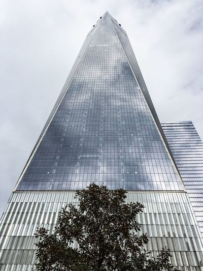 World Trade Center Tree Up Skyscraper Into The Clouds Glass Reflection Manhattan Tallest Building City And Nature One World Trade Center Vanishing Point Angles And Lines