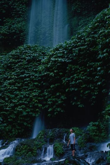 Rear view of waterfall amidst trees in forest