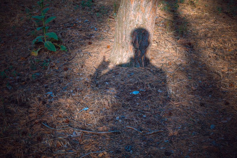 Shadow of person on field in forest