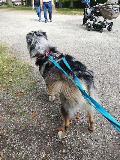 Low Section Pets Dog Men Human Leg Pet Leash Shadow