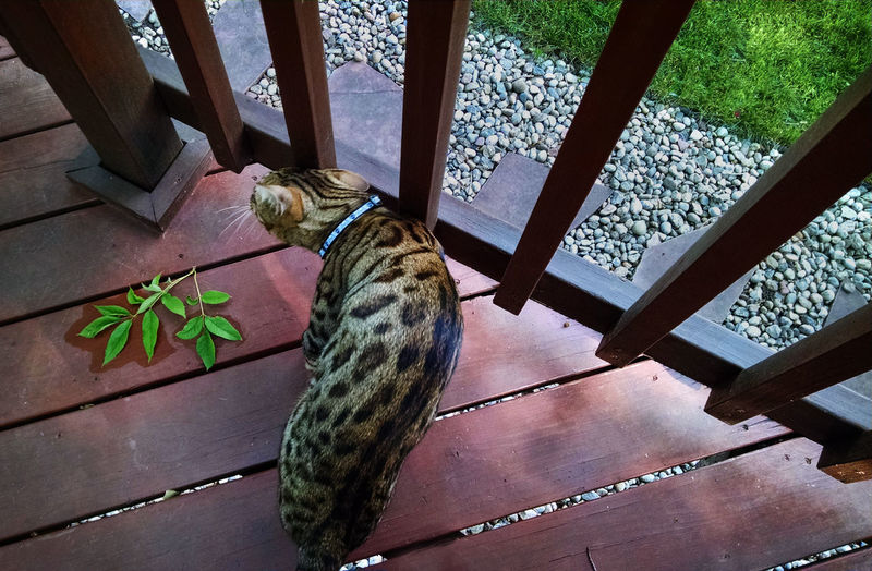 High angle view of cat at deck