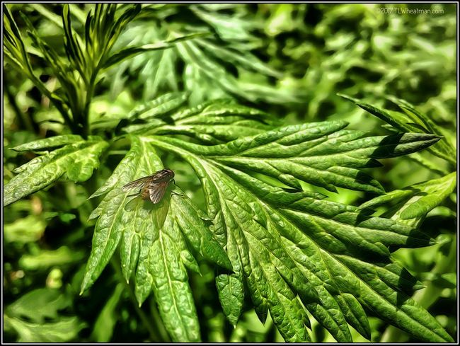 Bug on green leaves. 11817547