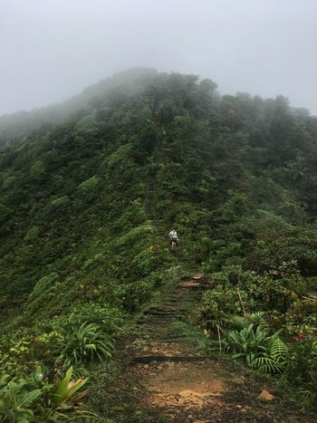 Dominica Adventure Beauty In Nature Day Fog Full Length Green Color Growth Hiking Landscape Men Mountain Nature One Man Only One Person Outdoors Plant Real People Rear View Scenics Sky Tranquil Scene Tranquility Tree Walking