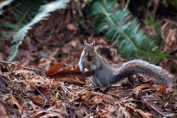 Animal Wildlife Animal Animal Themes One Animal Animals In The Wild Nature Land Squirrel Leaf Plant Part No People Day Outdoors Plant Dry Leaves