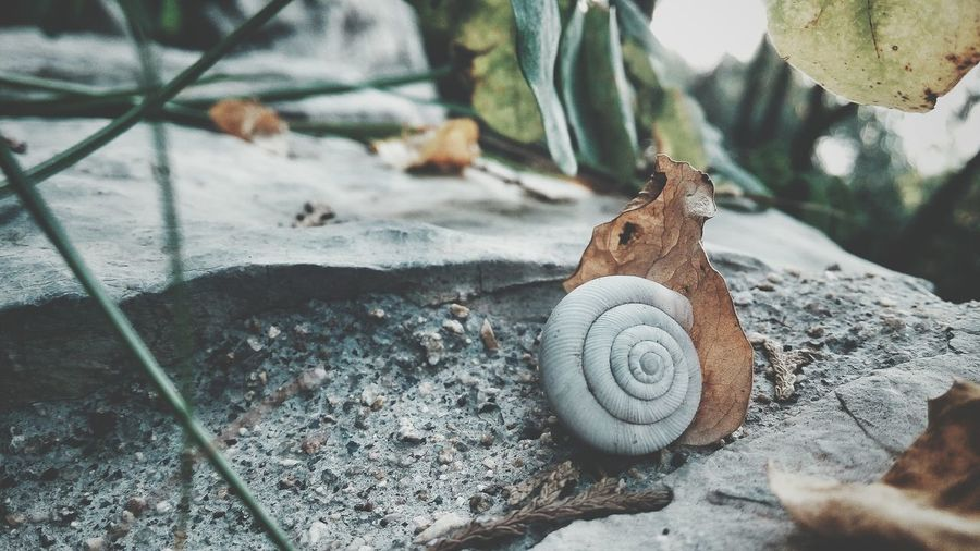 Find Beauty Anywhere You Can Road Side View Snail Photography Happens Everyday Hahahaha 😂😂😂😂😂 Smartphonephotography Original Experiences Few People Quiet Time From My Eyes To Yours Beauty Of Nature Roadside Shots