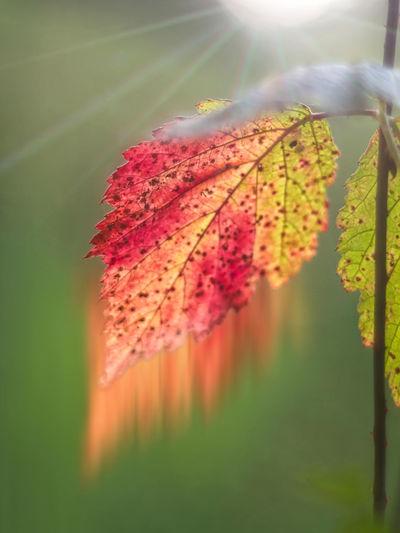 ArtWork Digital Imaging Grün Herbstblatt Herbstfarben Herbststimmung Sonnenstrahlen Verwischung