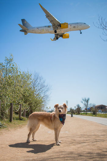 View of a dog standing against the sky