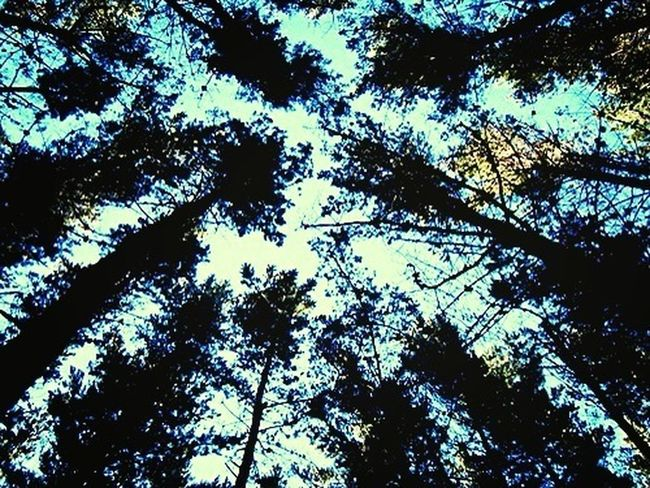 #sun#earth#trees