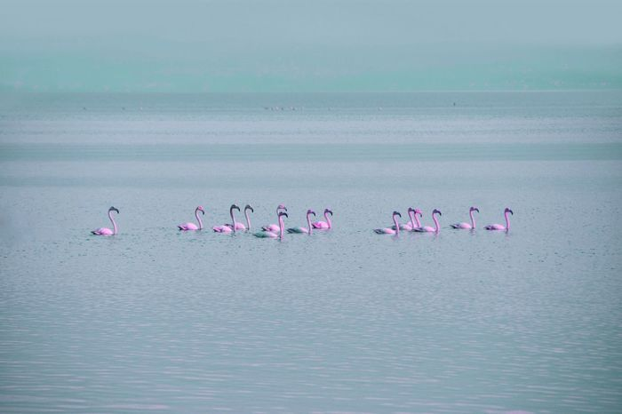 Inthewild Nature Flamingos Wildnature Beauty In Nature