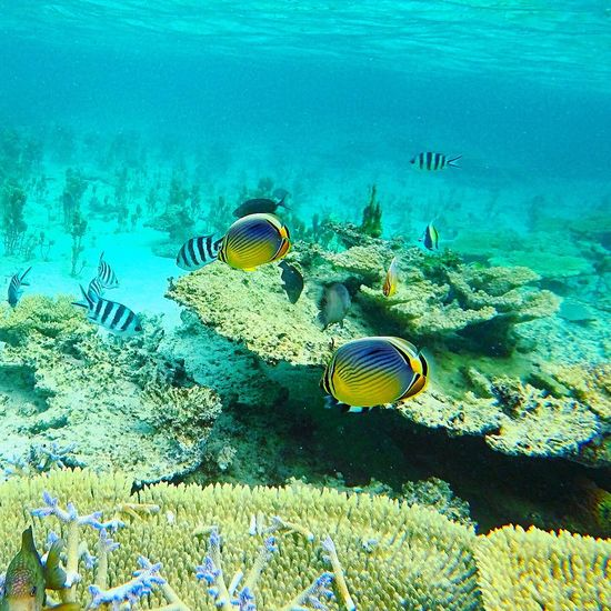 Underwater Coral Sea Life UnderSea Water Sea Nature Swimming Scuba Diving Snorkeling Lagoon Fish Diving Explore Mauritius