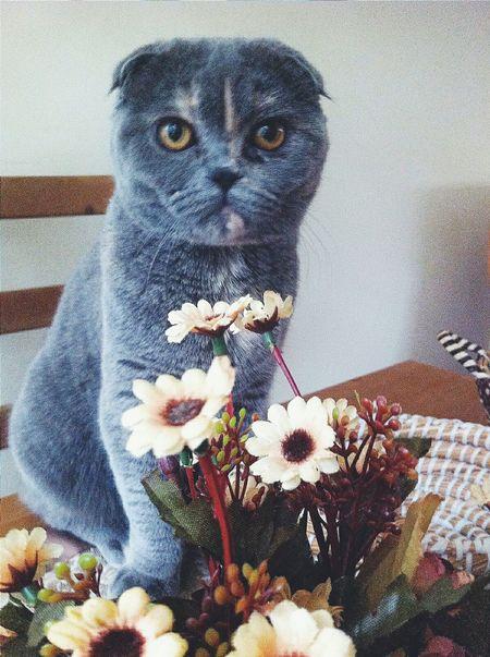 Cat Hello World VSCO Ankara Turkey