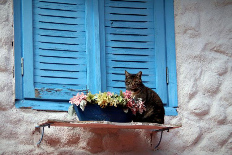 Cat resting on window sill