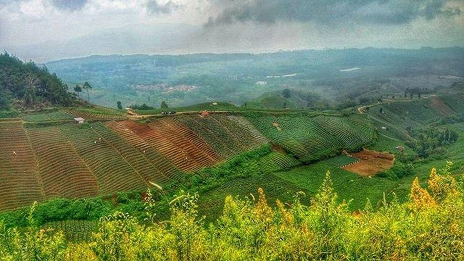 Sawai terracering planting Breath taking view of Indonesia Sefo  Nyribon Nyiremai