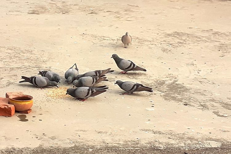 High angle view of pigeons on sand