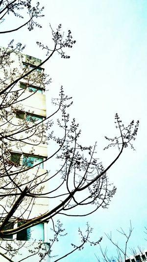 Trees Buliding