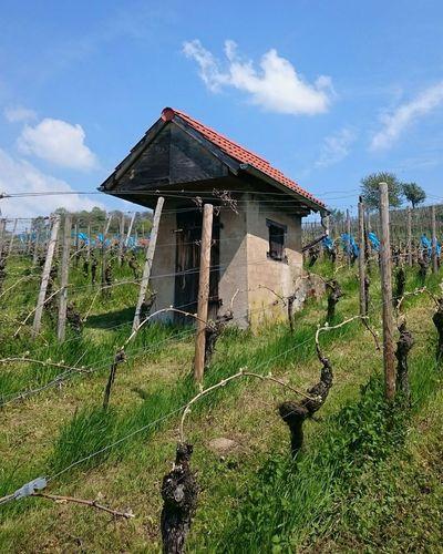 Wingertshäuschen Weinberghäuschen Wine Yards Wineyard Wingert Weinberg Weinberge Wineandmore Wine Vin Weinregion Hessen Weinanbau
