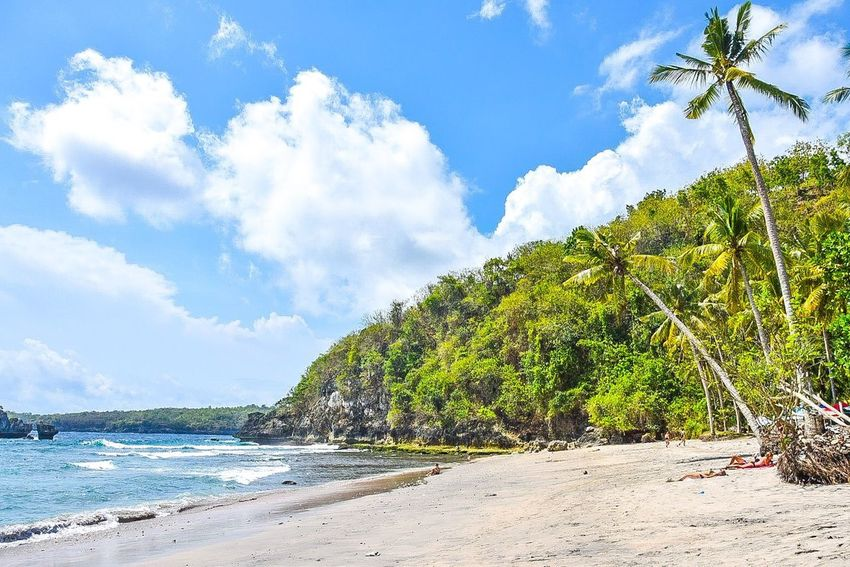 Crystal Bay, Nusa Penida - Bali, Indonesia Crystal Bay Nusa Penida Bali Bali, Indonesia Beach Water Scenics - Nature Sea Ocean Seaside Tropical Climate Palm Tree Coconut Palm Tree