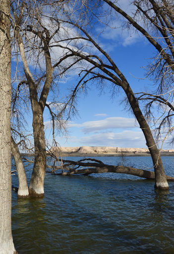 Water level little low Tree Water Sky Bare Tree Branch Waterfront Rippled Lakeside Tree Trunk Bark Fallen Tree