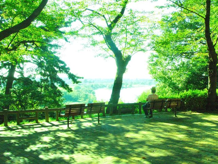 Tree Bench Chair Green Color Nature No People Outdoors Day Beauty In Nature