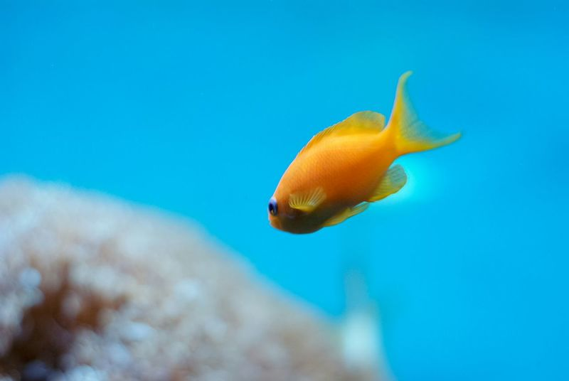 Golden Fish Golden Fish Goldfish Aquarium Theme Park Traveling Tampere Finland Turquoise By Motorola