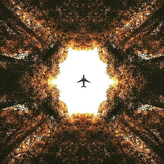 Plane Sky Sun Trees Photography Beauty Scene For You ;-) Flying