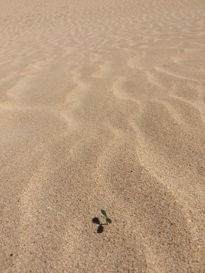 Sand Beach Track - Imprint Plant In Sand Nature Yellow Dune A New Beginning A New Beginning