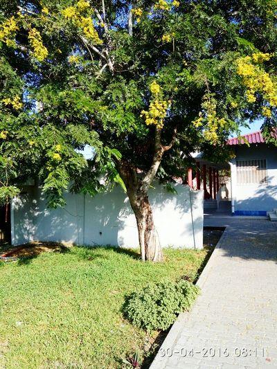 University Campus Tree Zen To Relax First Eyeem Photo