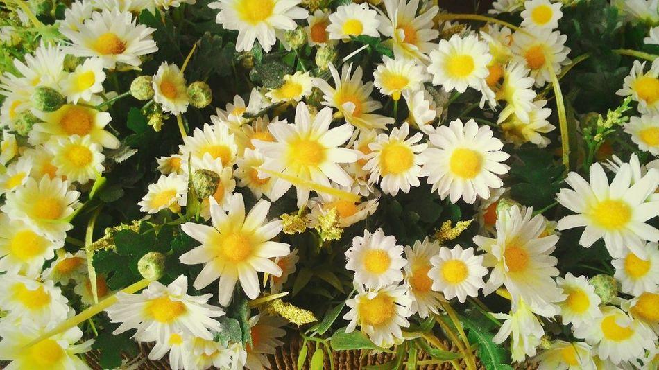 Life goes on. Flowerporn Flowers Whiteandyellow Papatya🌻 Life GrowingOlder Light Türkiye EyeemShot EyeEm Nature Lover