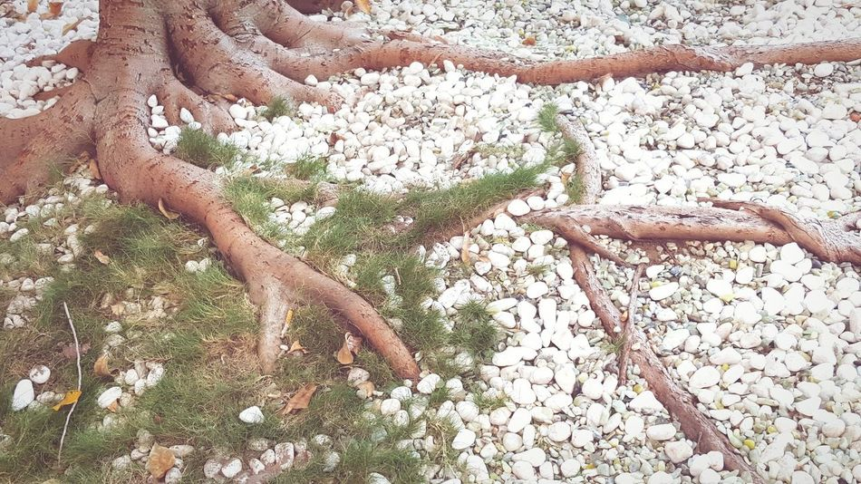 Tranquility in Chinatown Tree Roots Rock Garden White Moss Green Peace Tranquil Chinatown