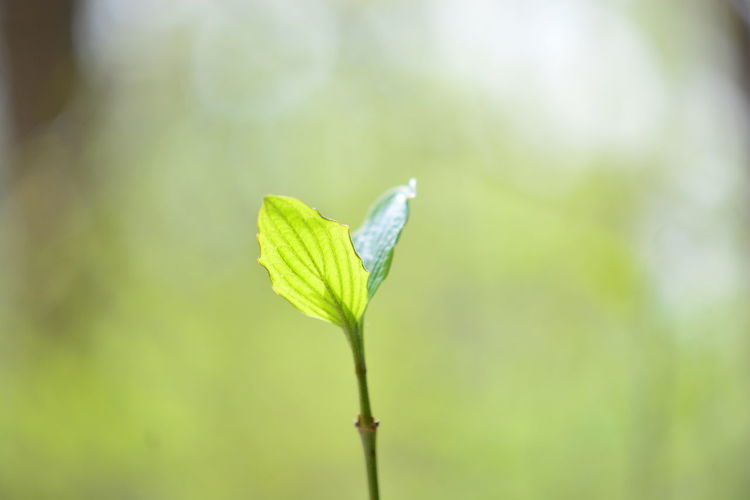 Plant Green Color Leaf Close-up Focus On Foreground Beauty In Nature Plant Part Vulnerability  Growth Nature Fragility Day No People Plant Stem Outdoors Beginnings Freshness Selective Focus Tranquility New Life Flower