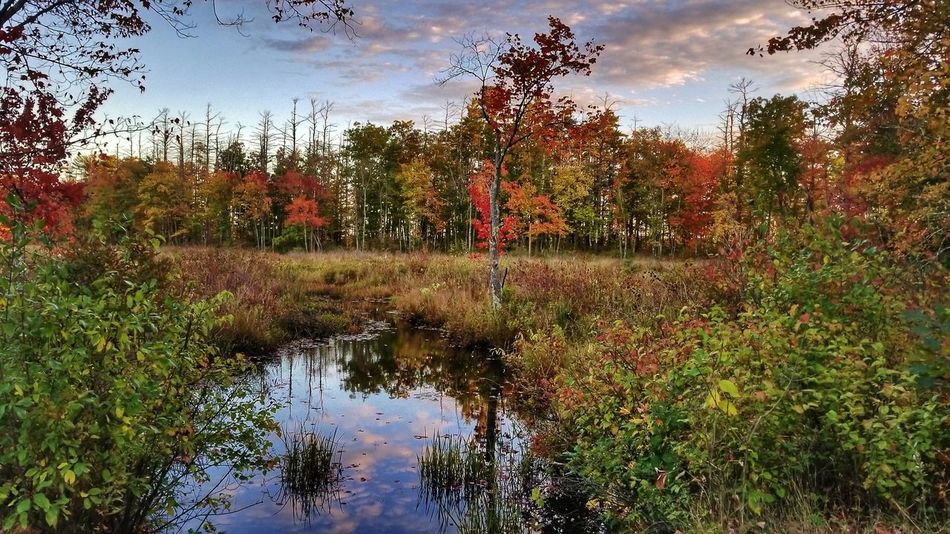 Water Reflection Tree Growth Wet Nature Day Outdoors Sky No People Puddle Beauty In Nature Nature Leaf EyeEm Best Shots - Nature Autumn EyeEm Nature Lover Landscape Scenics New England  EyeEm Best Shots Vibrant Color Reflection New England  Beauty In Nature